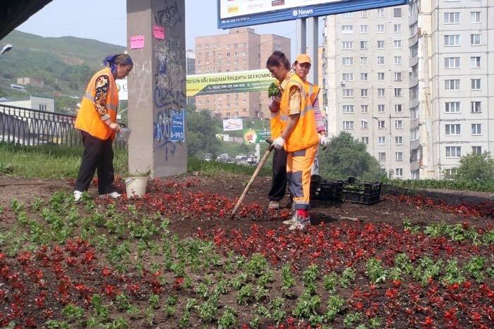 Владивосток, Баляевская развязка, сажают цветы