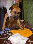 Собака Капрал - в приюте и на воле