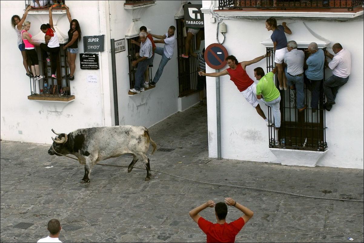 Бег быков. Бег от быков. Зачем?