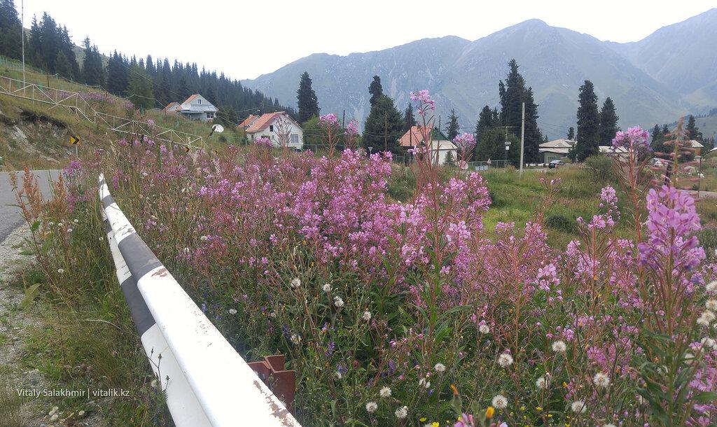 Цветы возле БАО.