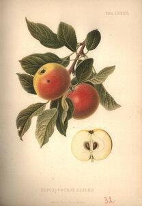 80. Бордсфорское яблоко