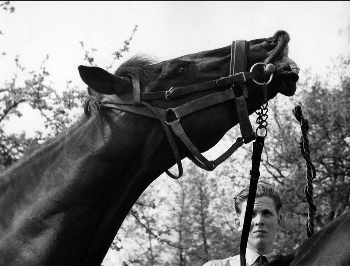 1955. Радостное ржание. Мезон-Лаффит