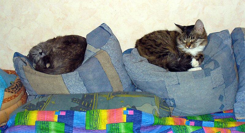 Справа налево: Дуся и Тинки почивают