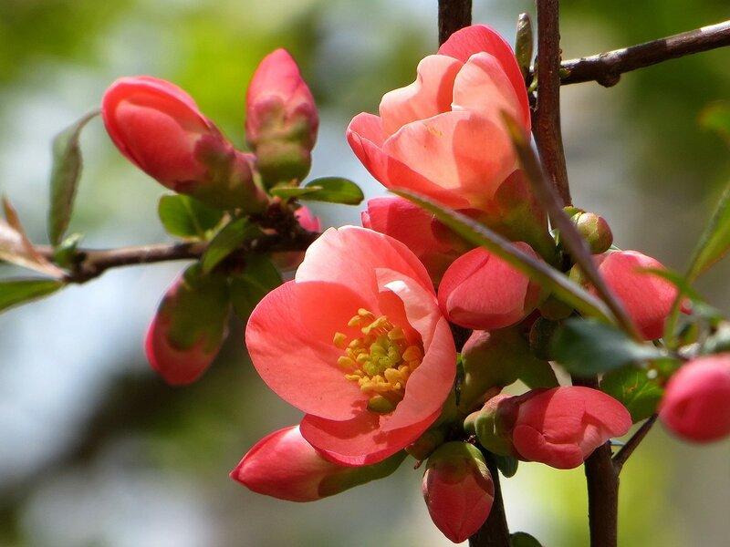 Волшебное цветение