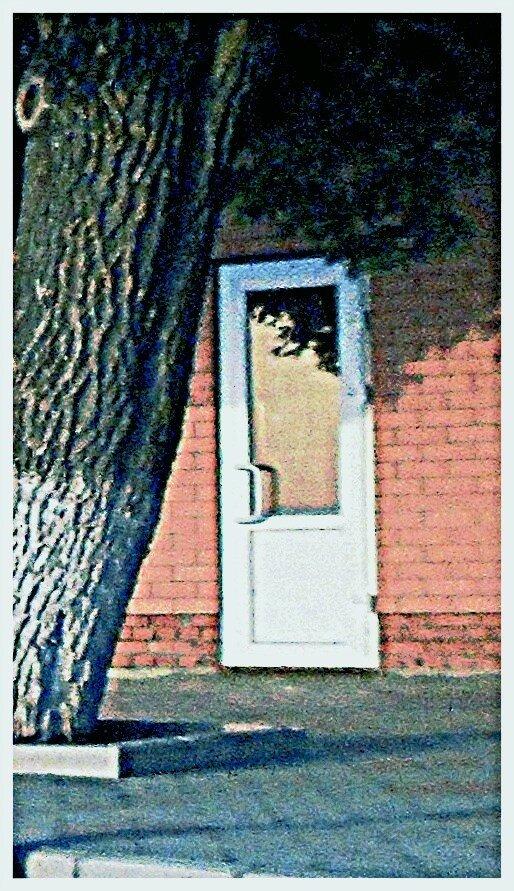 Вечером, у двери ... SAM_5989-16.JPG