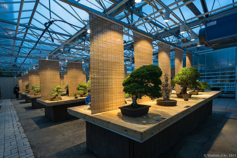 Выставка японских бонсай - Мир в глиняной плошке. 2015.