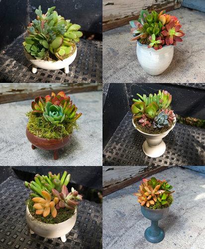 вазы с суккулентами растения в интерьере