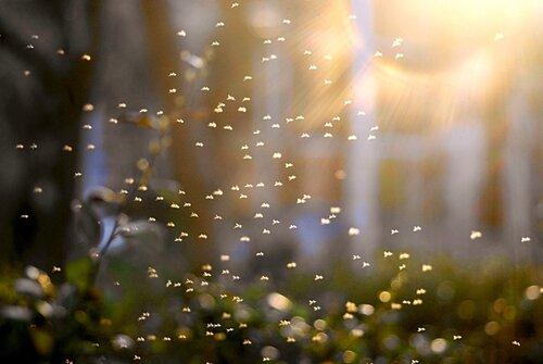 Мошкара в закатной подсветке
