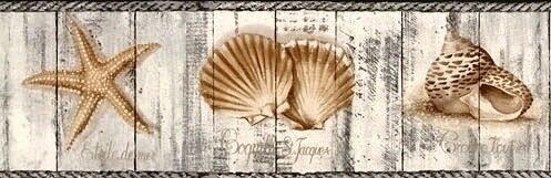 shell25.jpg