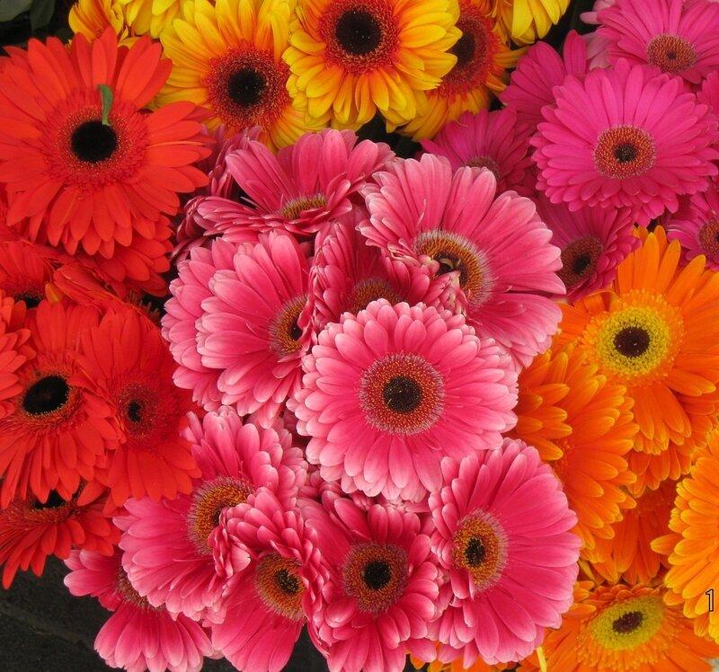 О цветах, характеристике и любовании!