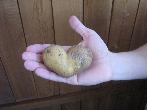 даже у картошки есть сердце!