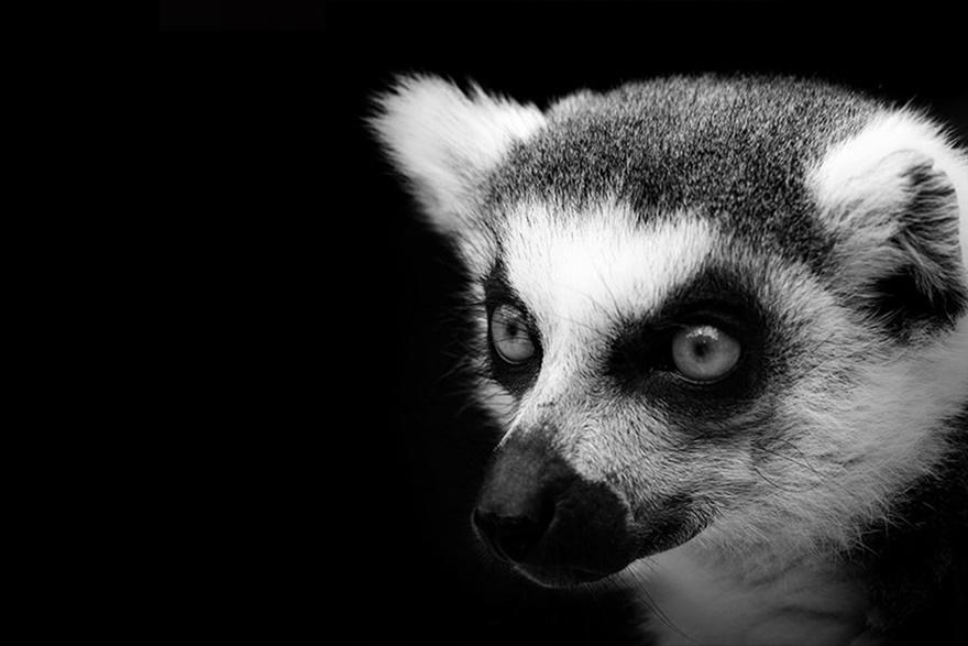 Лукас Холас. Черно белые портреты животных 0 1419c5 ecbabac4 orig
