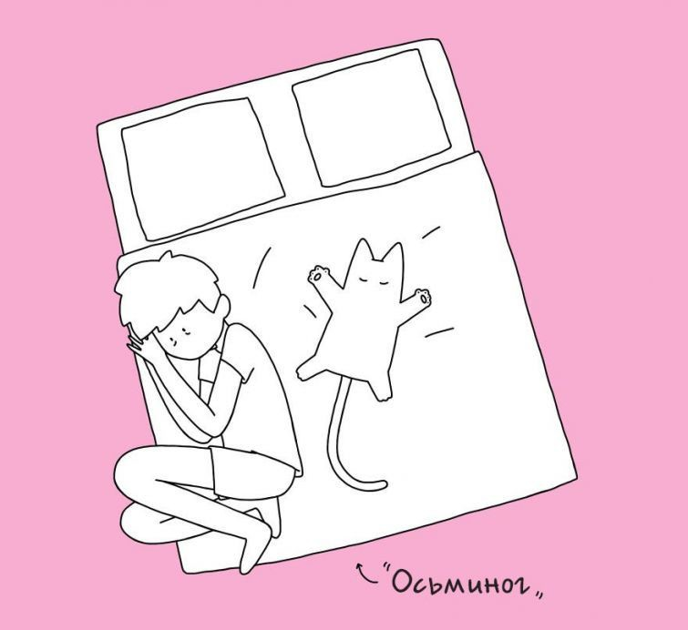 10 кошачьих поз сна