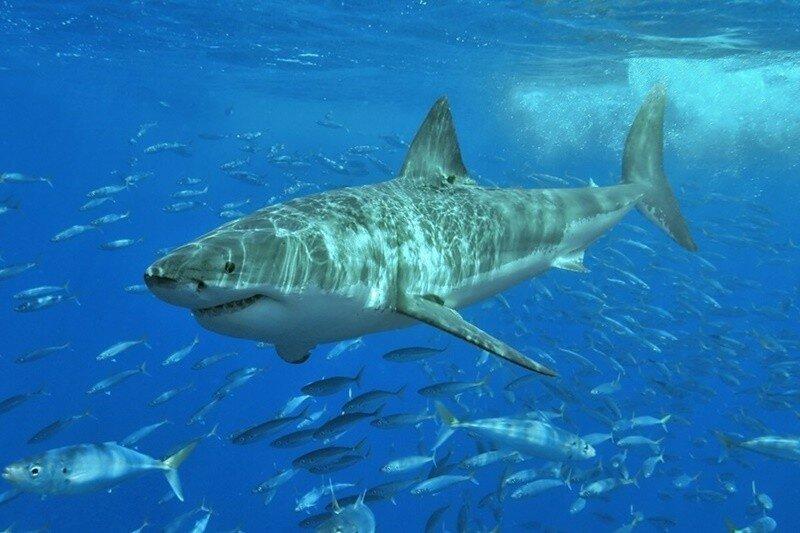 Оказывается, водятся животные, предки которых населили планету более 360 миллионов лет!