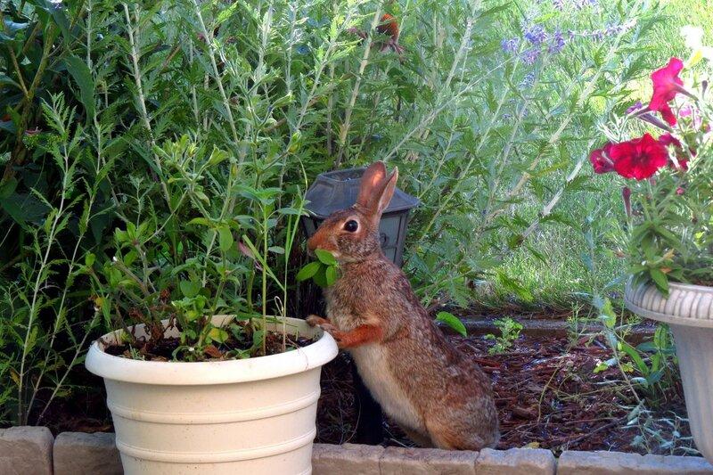 Утро в моем саду