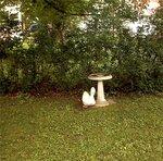 Фонтанчик для птиц в саду Анны Юрьевны