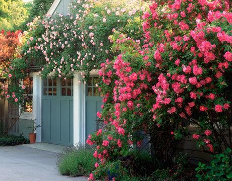 Красивый сад среда обитания идеи