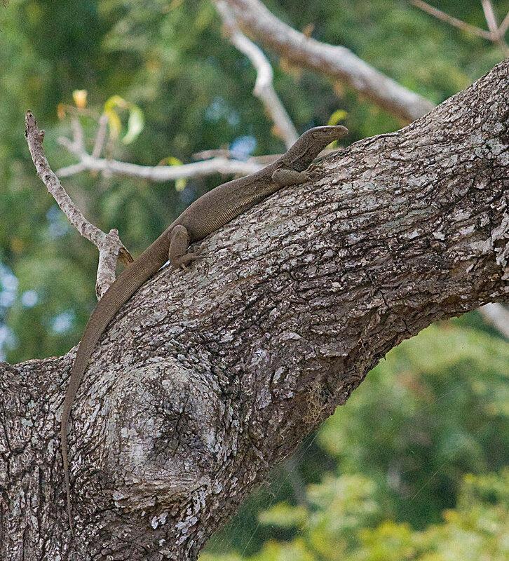 Слившись с деревом....