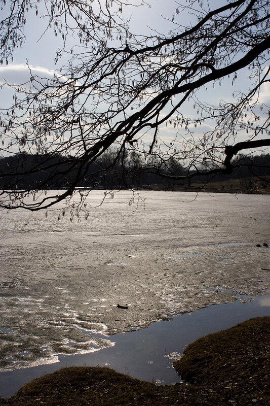 Ветви над тающим снегом пруда