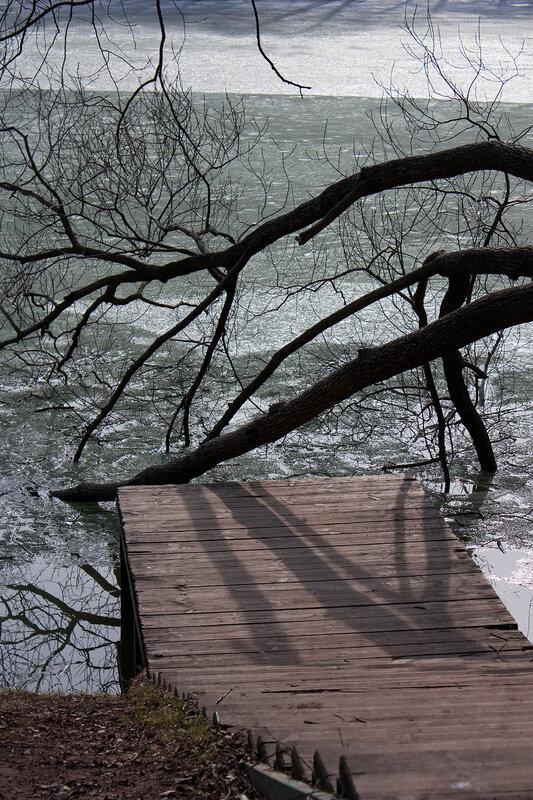 Ветви ивы над водой
