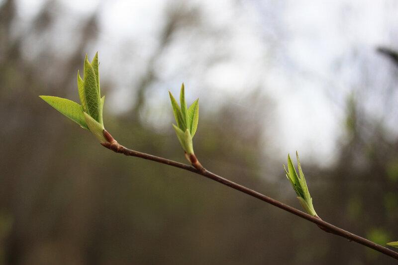 Зеленая молодая ветка