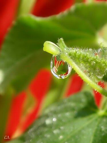 Секреты выращивания огурцов
