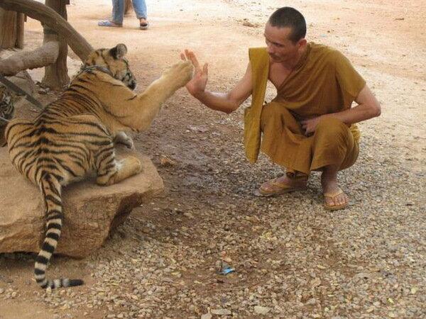 """""""Дай пять!"""" Прикольные животные"""
