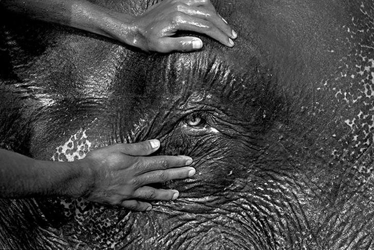 17. Чистка слона на юге Индии. 18. Махаут со слоном на Шри-Ланке.