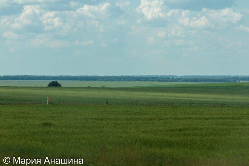 Лесостепь в Рязанской области