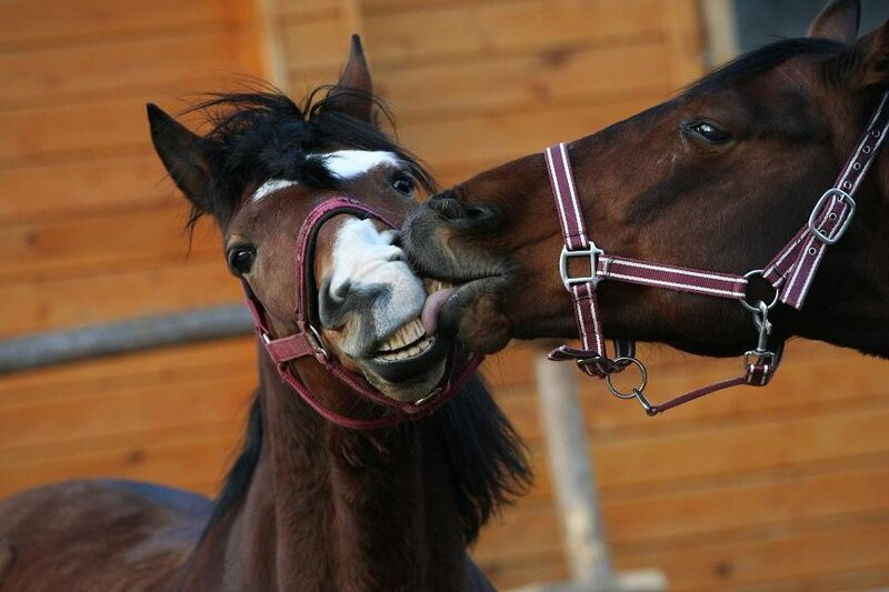 Лошадей трудно не любить