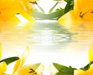 цветочные и травяные фоны от ©shereelady.ru