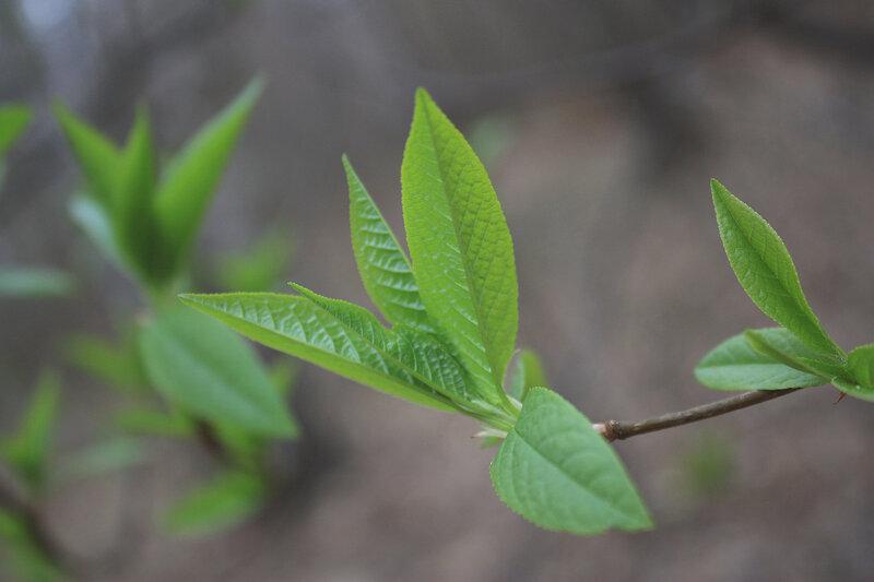 Молодой зеленый цвет