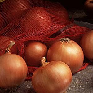 Лук репчатый - применение и рецепты