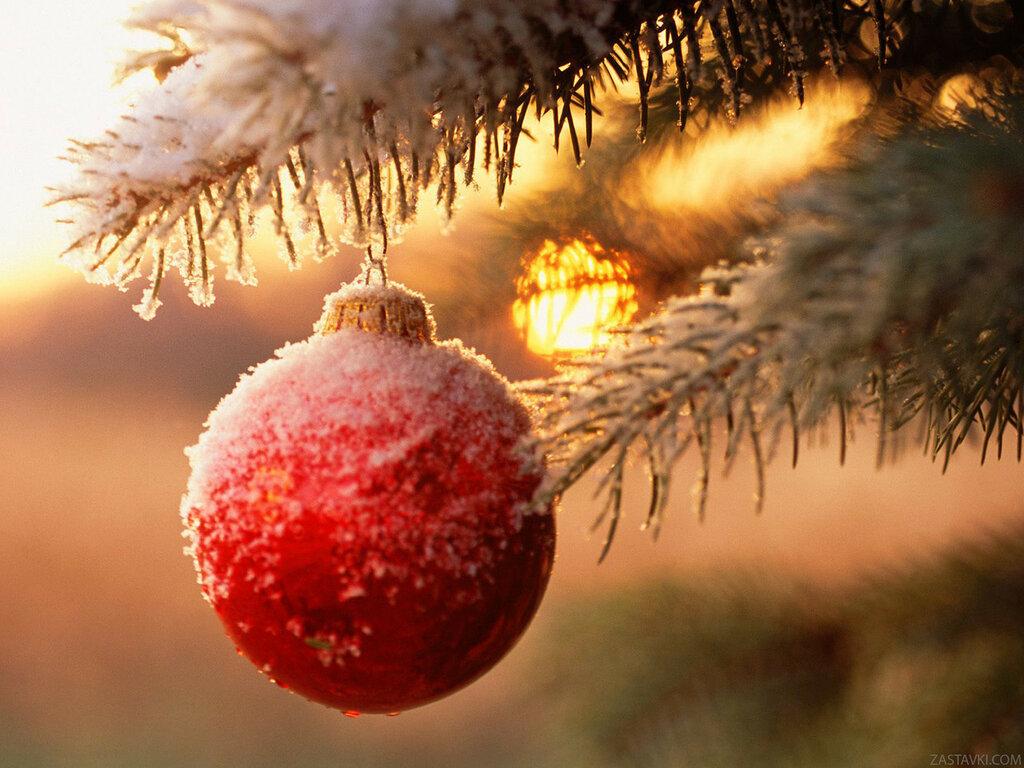 ball_branch_tree_snow_new_year_stuff_ultra_3840x2160_hd-wallpaper-157626.jpg