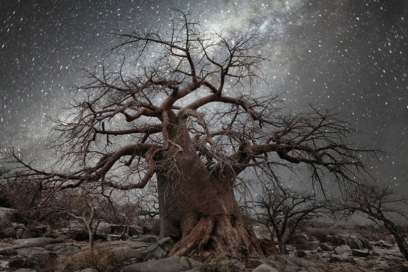 Фотограф Бет Мун: древние деревья Африки под звездным небом