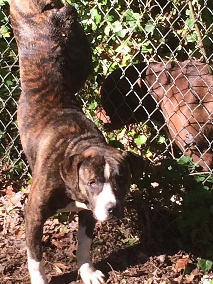 Собака оставалась в течение двух дней со своей подругой, попавшей в беду