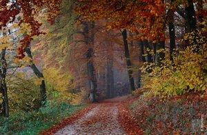 Осень златокудрая