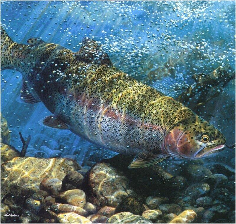 Mark Susinno (Марк Сузино), Рыбы, подводный мир