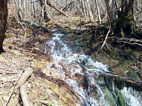 У потока весеннего, в лесу горном ... SDC19871