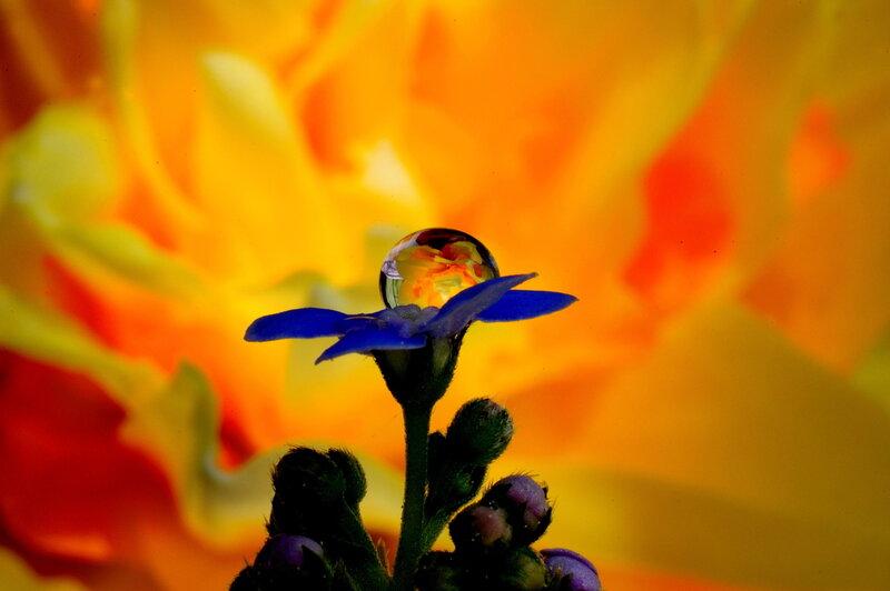 Цветок огня.