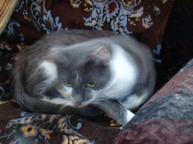 Гиперпространственный Кот