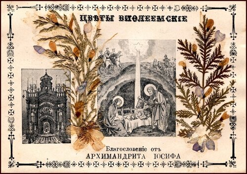 Открытка с гербарием начало XX века ЦВЕТЫ ВИФЛЕЕМСКИЕ.