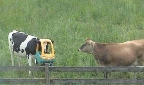 глупые смешные животные
