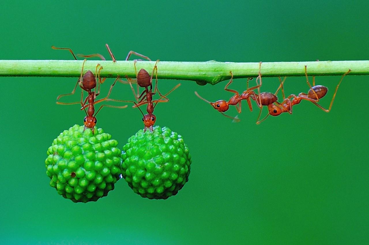 Как устроен муравейник или муравьиная колония, жизнь муравьев