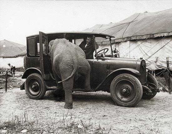 elephansytuir.jpg