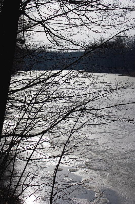 Ветви и лед