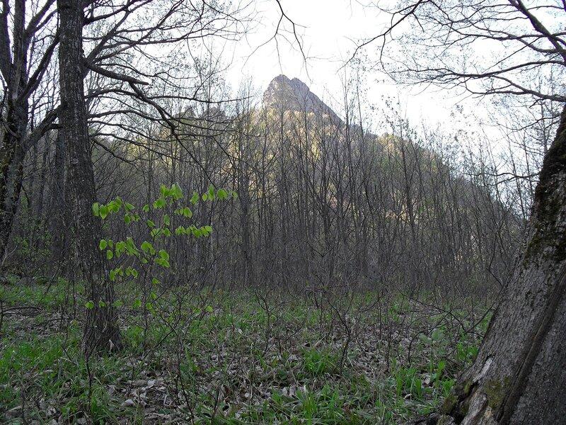 В лесу весеннем ... SDC15859