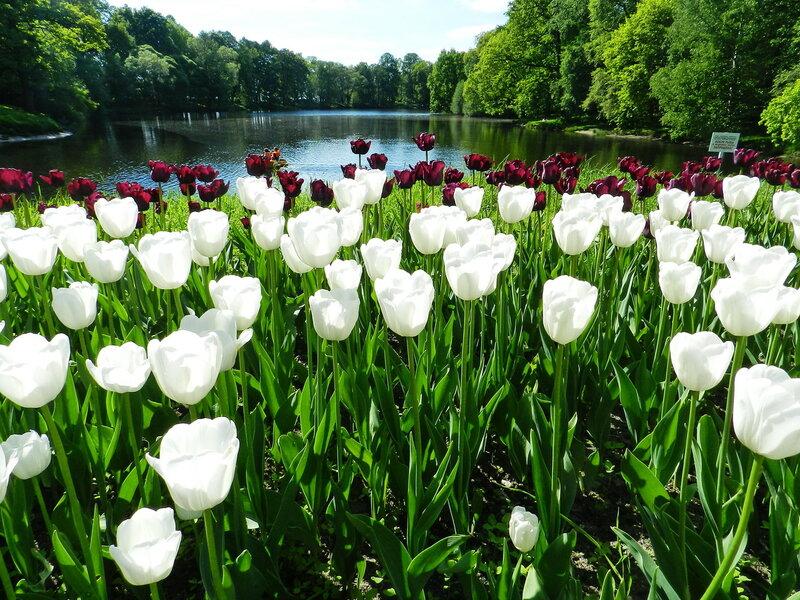 Фестиваль тюльпанов. ч.2