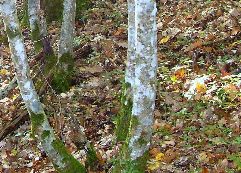 Листья опавшие, в лесу, под Горячим Ключом, на слёте (189).JPG