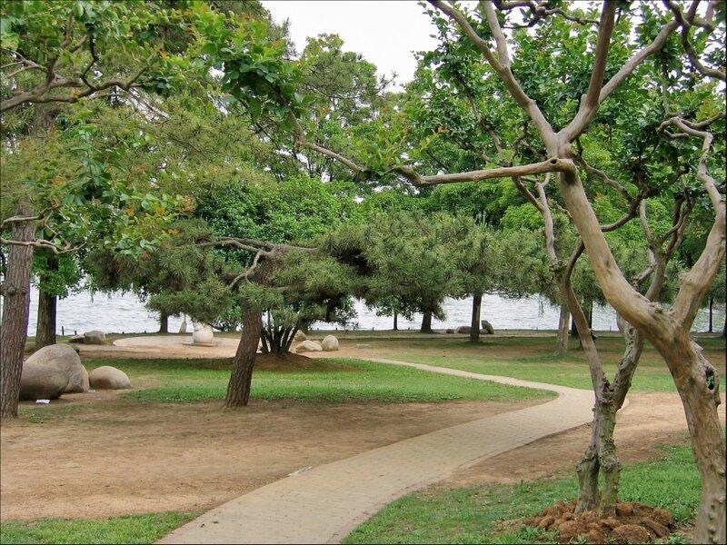 Деревья в Тинтао, Ухань